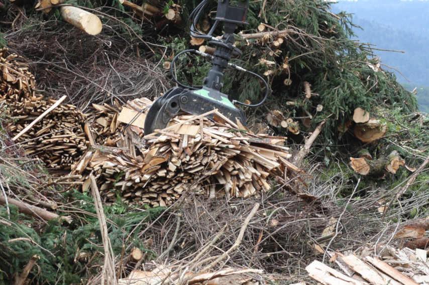 biomassa-tutela dei boschi
